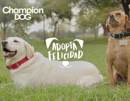 Champion Dog – Adopta Felicidad